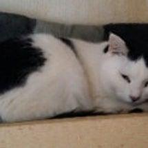 「保護猫一覧(福島の…