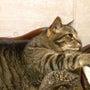 猫の尿道結石・カテー…