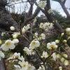 二月のグリーンリーフの画像