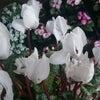 立春にの画像