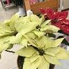 寒いのにお店の植物達は・・・の画像