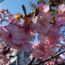 もうすぐ春ですね  …