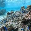 青の洞窟には行くことができませんでしたが、お魚いっぱいのサンゴビーチで体験ダイビング!!の画像