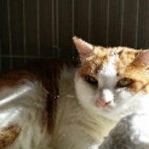 「保護猫キャリア、福…