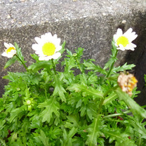春のかけらが見えたの記事に添付されている画像