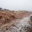 2月9日奈良市は雪が…