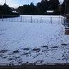 昨日の雪はの画像