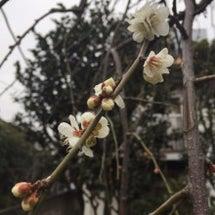 節分も終わり立春