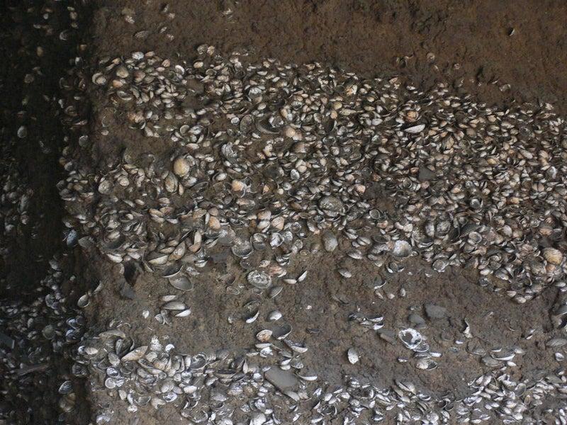 貝層断面 #上高津貝塚ふるさと歴史の広場 #土浦市 #茨城 観光二日目10