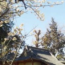 春の季語「梅」
