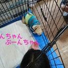 chouchou岡山店での譲渡会報告♪の記事より
