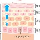 ⭐️自分の肌で作られる潤い成分以上の美容液はない⭐️の記事より