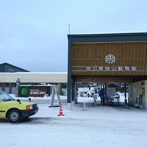 旭山動物園の画像
