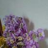 義理花?の画像
