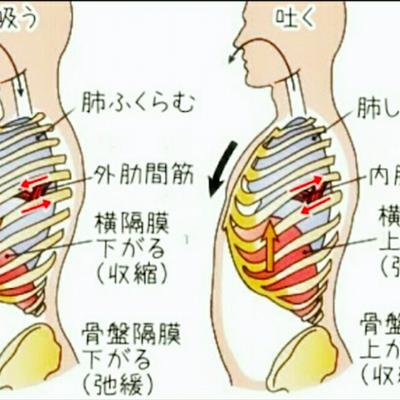 肋骨の広がりとアンダーバストの記事に添付されている画像