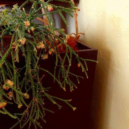 リプサリスの花が咲いた の巻 フローリストが提案する インテリアのすゝめ