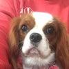 ダックスフンドサイズのお手元にお持ちの犬服をご支援いただけませんか?の画像