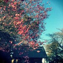 春の季語「白梅紅梅」