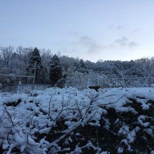 I love snow!!の画像