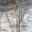 雪ですよ❗️
