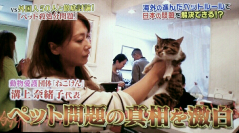猫 保護 団体 おかしい