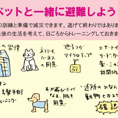 ペットとの避難訓練の記事に添付されている画像