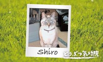 腎不全 高齢猫 治療 気功 体験談 猫 ねこ ネコ にゃんこ