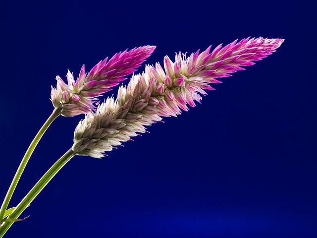 flower-218483_640.jpg