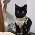 原元美紀の画像「猫と映画「八甲田山…」