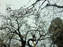 様々な枝ぶり
