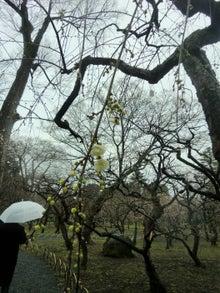 月の桂の花のアップ