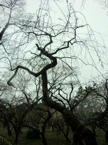 印象的な枝ぶり