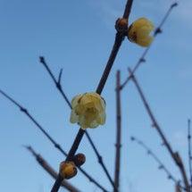 春はもうすぐ⁉