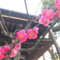 【大森】大森浅間神社の御朱印の記事に添付されている画像