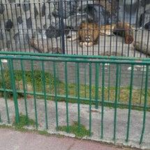 動物園に行きました‼