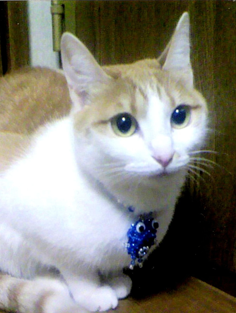 order embroidery art 猫のモモチさん