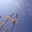 春の予感♡の記事より