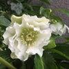 春先の花達の画像