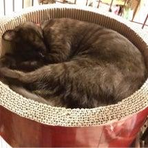 黒猫 去勢手術終了