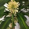 タキマテック東京支店の幸福の木に花が!!の画像