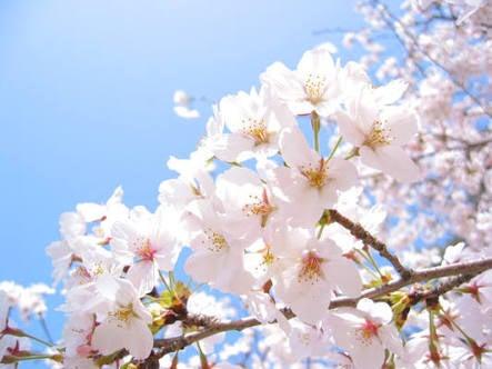 春です!!の記事より