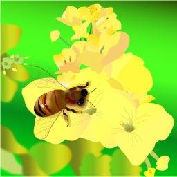 3月もよろしくお願い致します イラスト入れーターyayaちゃん今月の絵は 菜の花とミツバチ Fm79 7mhz京都三条ラジオカフェ Yu S time ゆうズ ミュージック カフェ