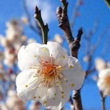 春の訪れ・・・癒され…
