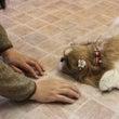 動物行動治療は最近の…