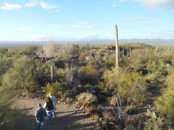 アリゾナ・ソノラ砂漠博物館 | ...