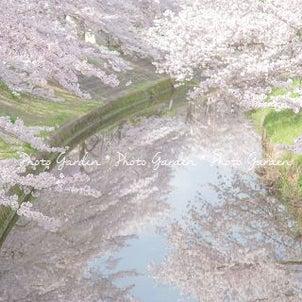 【募集告知】SHA.sha.PAKU vol.37「お弁当持って、お花見に~♪」の画像