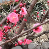 春よ来いの画像
