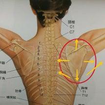 肩甲骨を動かす…とは…