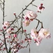 スタッフ情報★9日〜…
