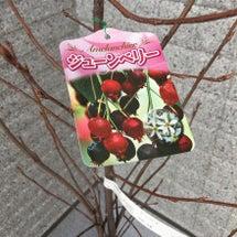 【シンボルツリー】 …